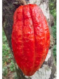 Maglio - Uovo Fondente 100% Cacao Criollo - Cuyagua - 180g